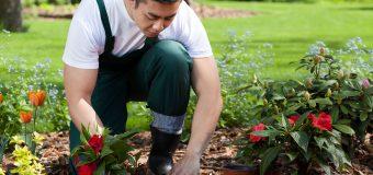 Praca na świeżym powietrzu – o tajnikach zawodu ogrodnika rozmawiamy z Janem Potockim