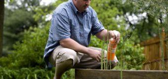 Jak urządzić ogród, który robi wrażenie – rozmowa z Kamilem Loską, właściciel firmy zajmującą się projektowaniem ogrodów