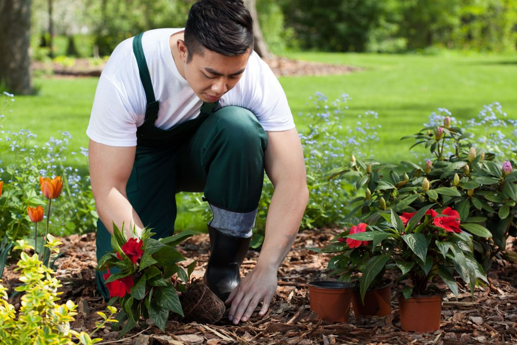 28646787 - planting flowers in a beautiful green garden