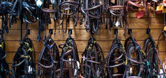 Sklep dla pasjonatów koni – czy to się opłaca?