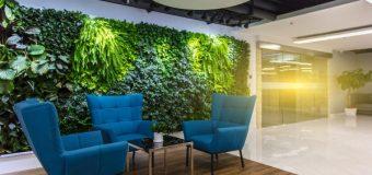 Zieleń w biurze – korzyści z roślin w przestrzeni biurowej