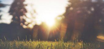 Profesjonalne zakładanie i pielęgnacja trawnika – poznaj korzyści!